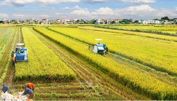 Được sử dụng đất nông nghiệp khi đã hết thời hạn sử dụng trong sổ đỏ?